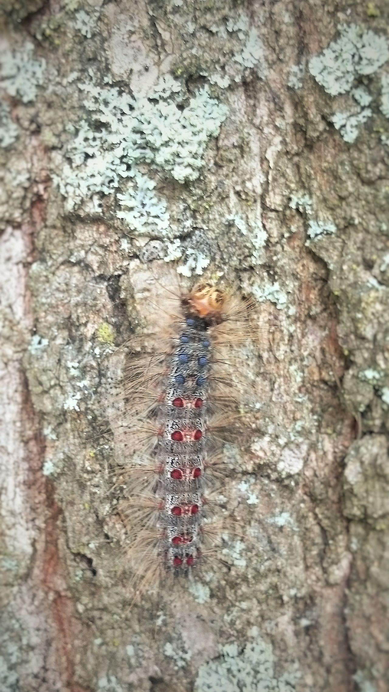 Caterpillar Tree With Catepillars