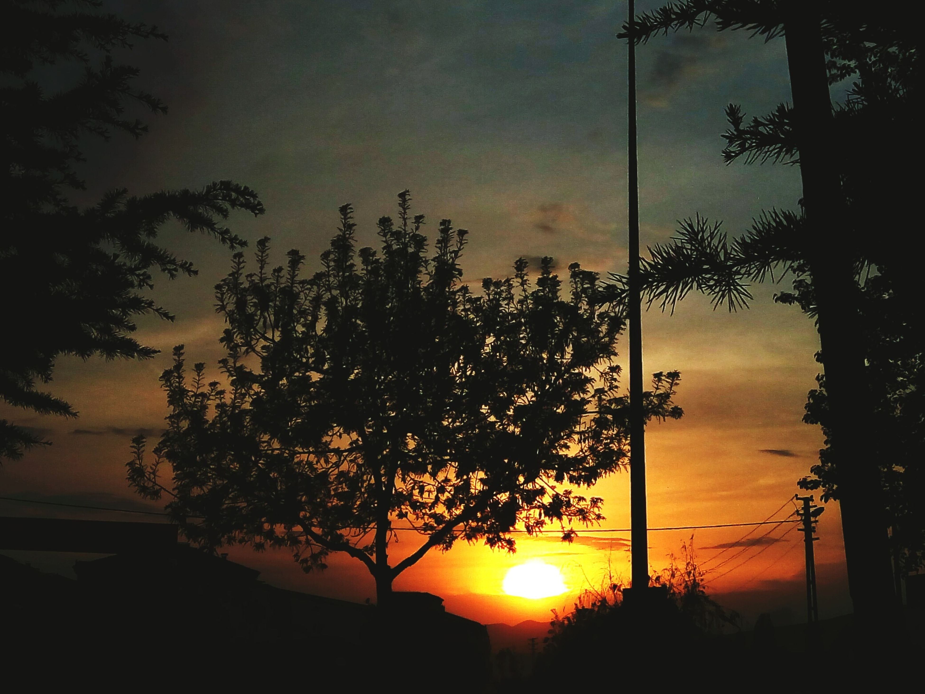 tree, sunset, sky, cloud - sky, nature, scenics, silhouette, beauty in nature, no people, sun, growth, tranquil scene, outdoors, dusk, tranquility, low angle view, branch, moon, day