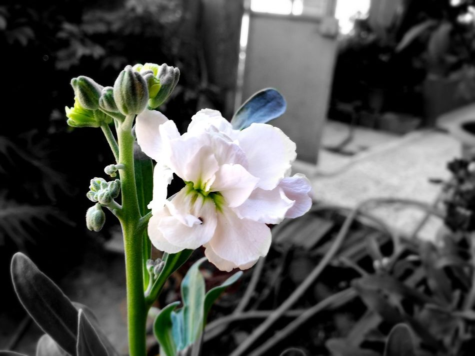 Flowers Nature Photography Blackandwhite