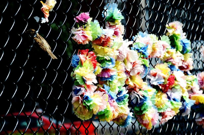 Day High Angle View No People Outdoors Multi Colored Close-up Flower Nature Freshness