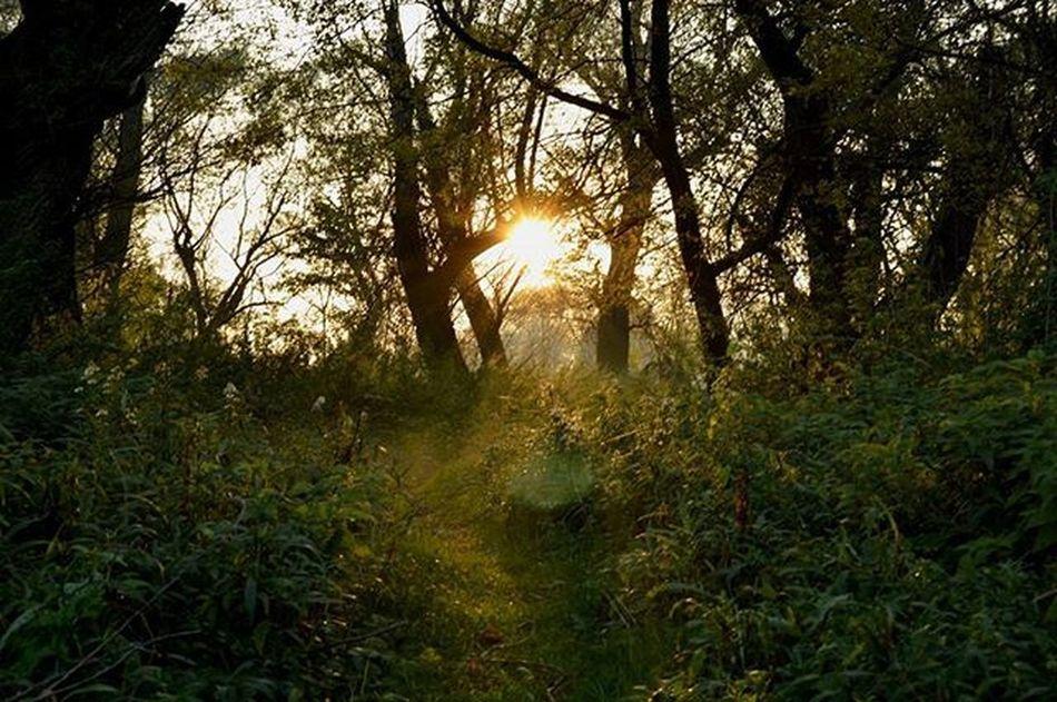 Once upon a time... Sunset Sun Sunshine Forest Nature Naturelovers Picoftheday Photooftheday Green Beauty Loveit Fairytale  Placeforlife Slovakia Slovensko Devinska Priroda WOW Nikon D3200