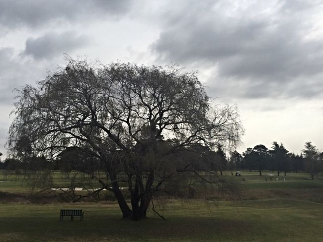 Winter Is Here. Cold Weather Darker Clouds Trees Bench Tree Silhouette Midday No Sun No People Southern Hemisphere