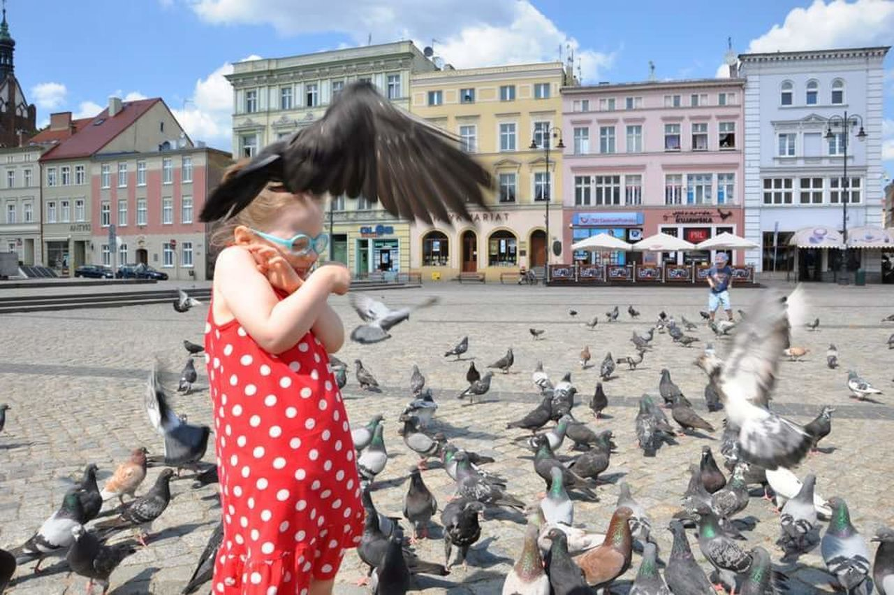 Bydgoszcz Doves, Birds Birds Child Summer Feeding The Birds Old Town