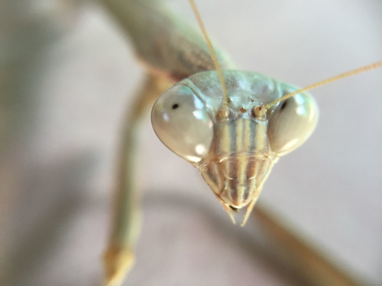 insect, close-up, animal themes, one animal, no people, animals in the wild, outdoors, day, nature, eyeball