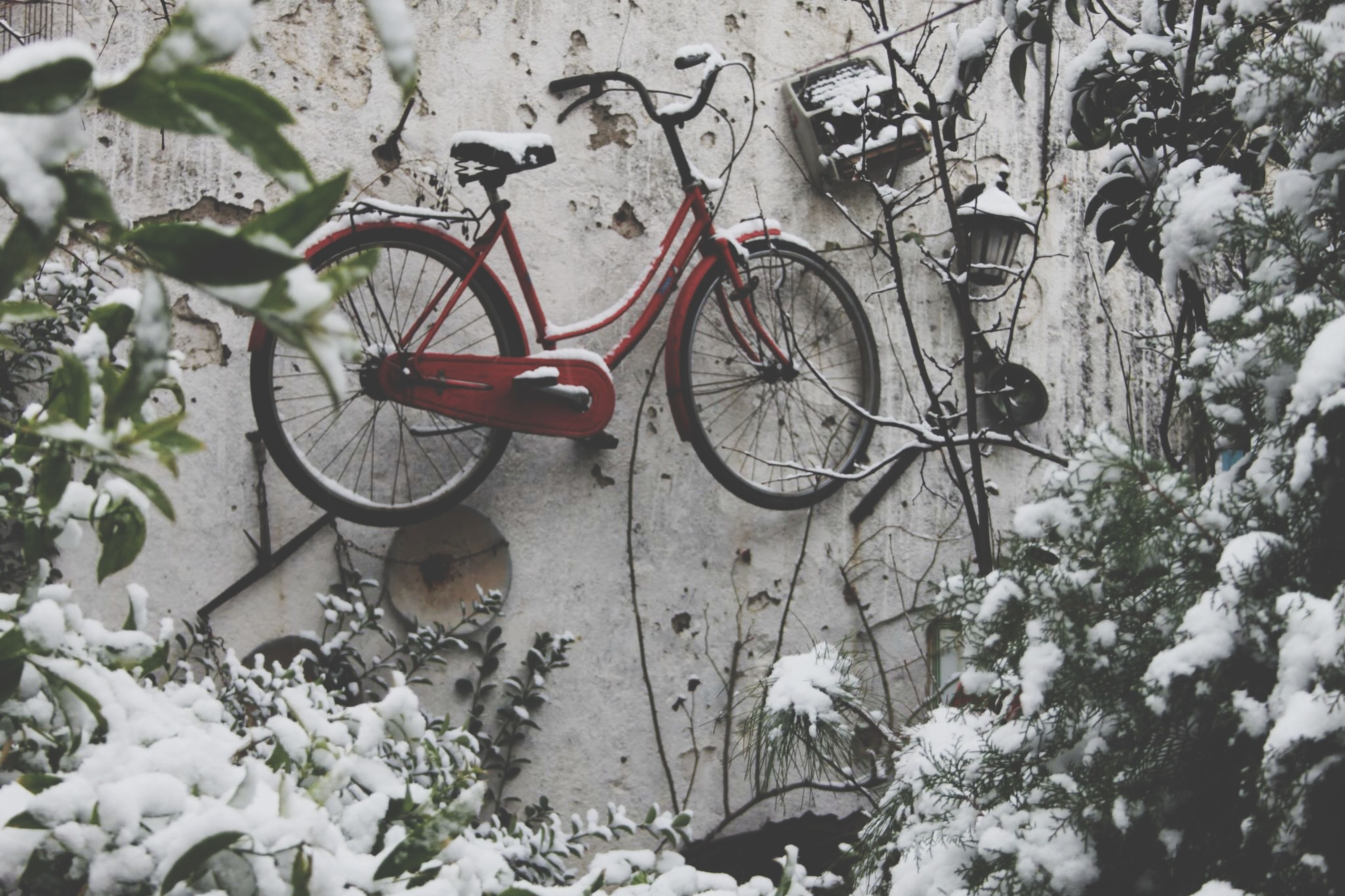 bicycle, transportation, land vehicle, mode of transport, stationary, parking, parked, plant, day, outdoors, no people, high angle view, wall - building feature, street, nature, growth, sunlight, wheel, snow, flower