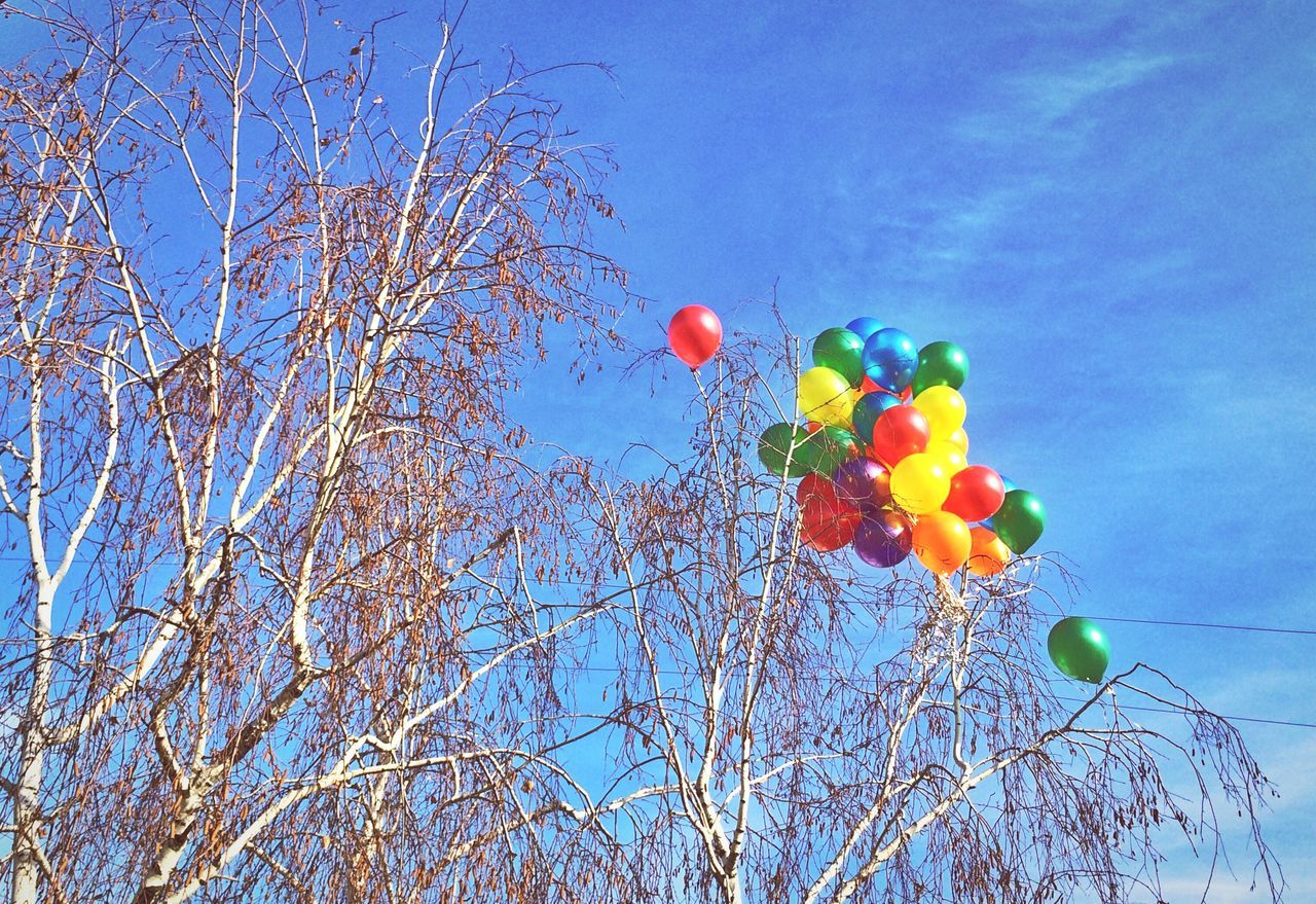 Beautiful stock photos of moscow, Balloon, Bare Tree, Day, Decoration