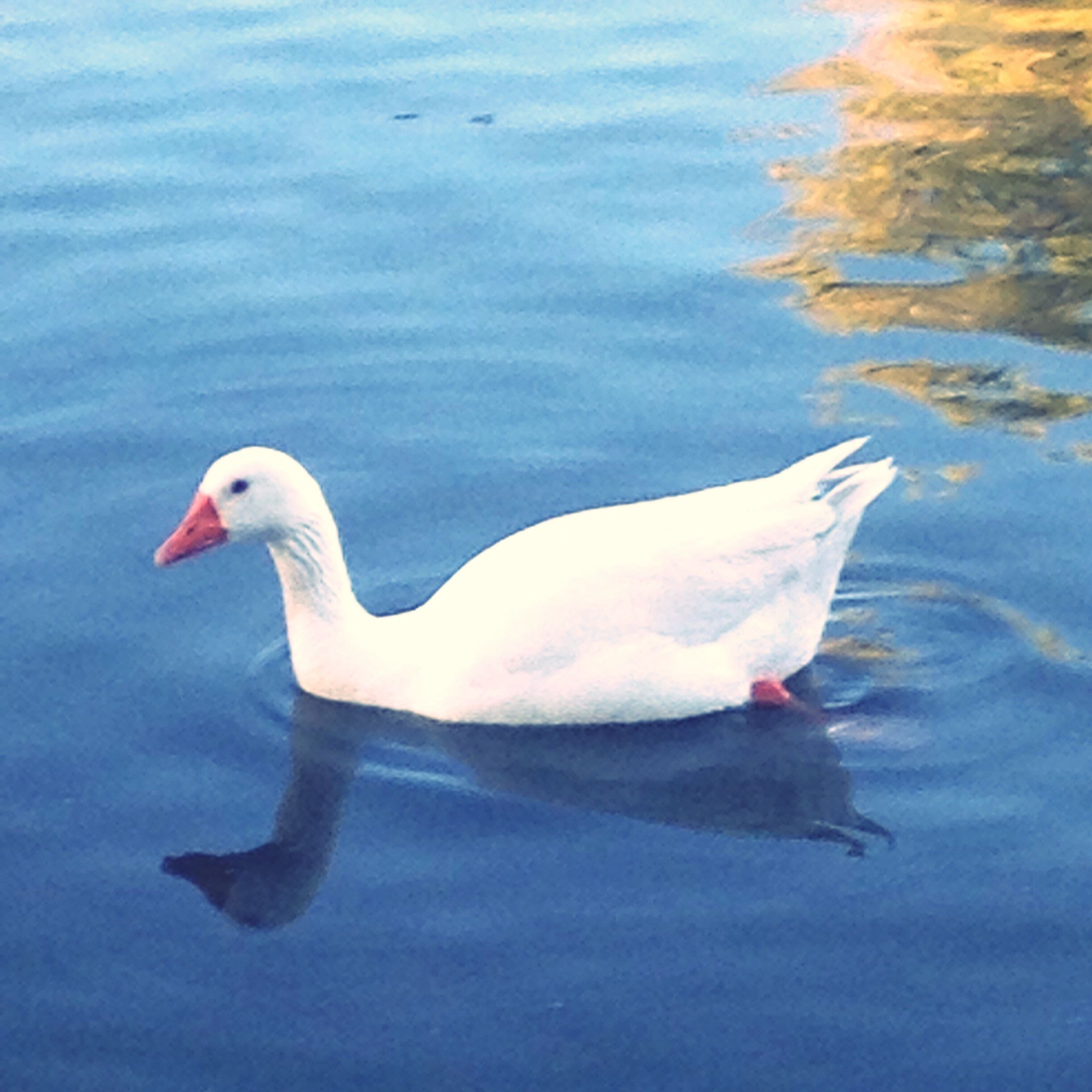 bird, water, wildlife, lake, nature, rippled, outdoors, no people, beauty in nature, day, close-up, tranquility