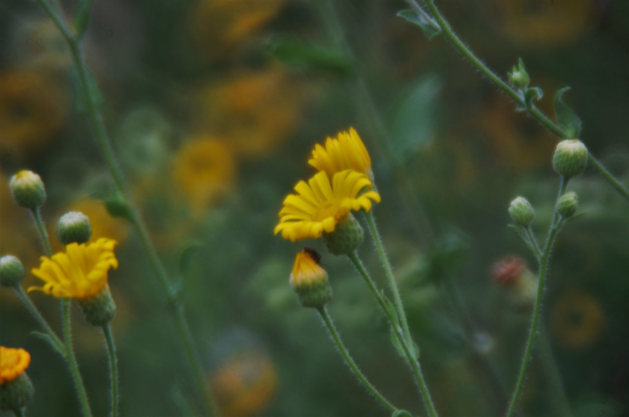 flower, growth, nature, plant, yellow, beauty in nature, fragility, no people, petal, freshness, blooming, day, outdoors, flower head, close-up