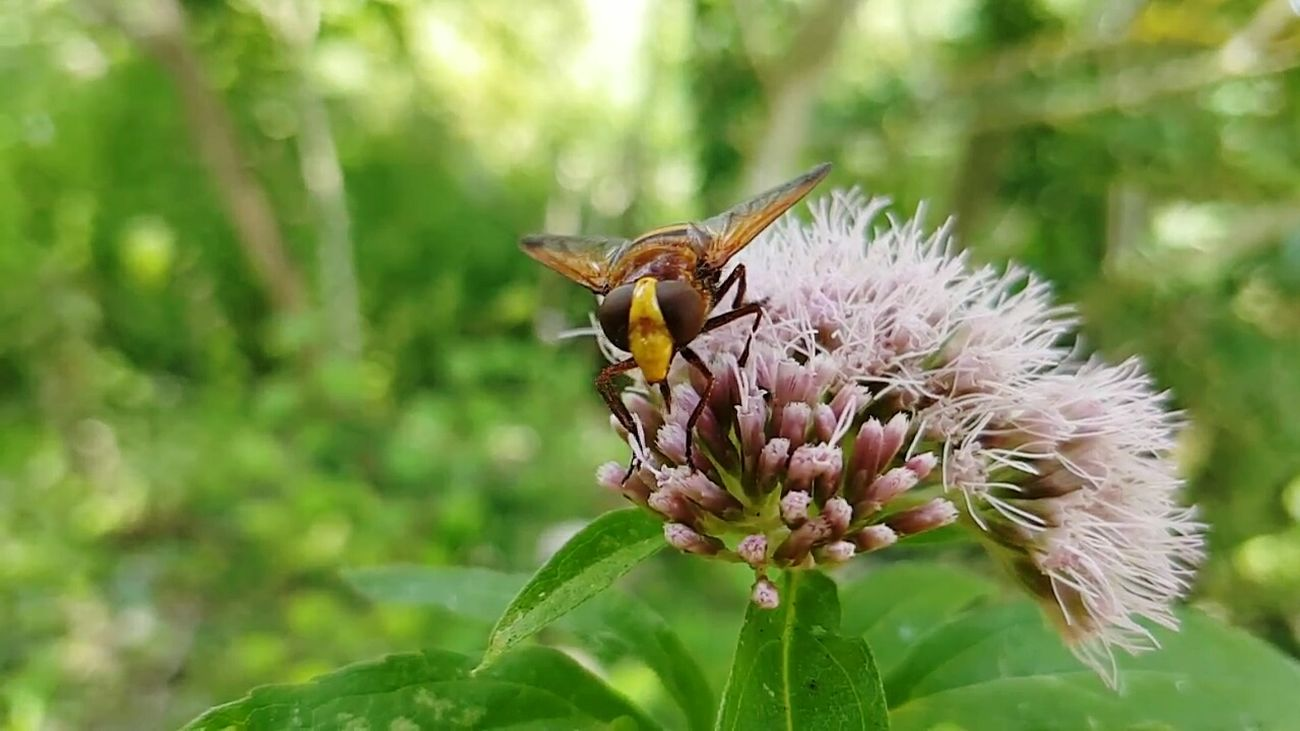 Bee Insect Flower Nature Animals In The Wild Animal Themes Close-up Pollination Green Color Plant Outdoors Beauty In Nature Samsung Galaxy S7 S7 Edge Bee