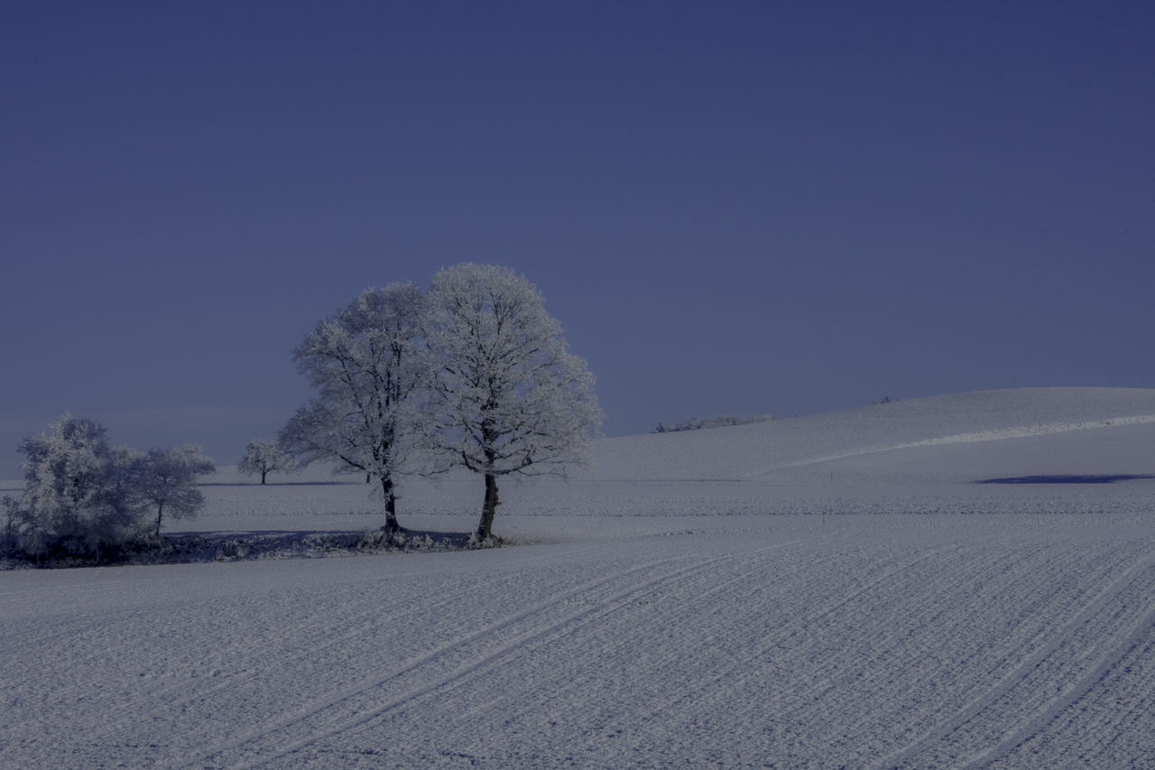 Bare Tree Beauty In Nature Blue Clear Sky Cold Temperature Day Landscape Moon Nature No People Outdoors Scenics Shadow Silence Sky Snow Tranquil Scene Tranquility Tree Winter