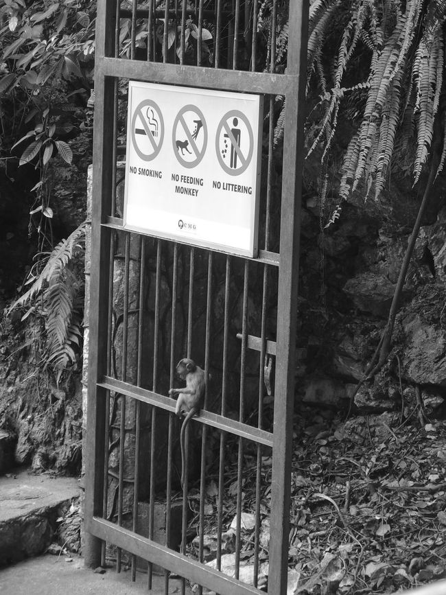 Baby Batu Caves Batu Caves -Malaysia Cave Door Monkey Nature Small