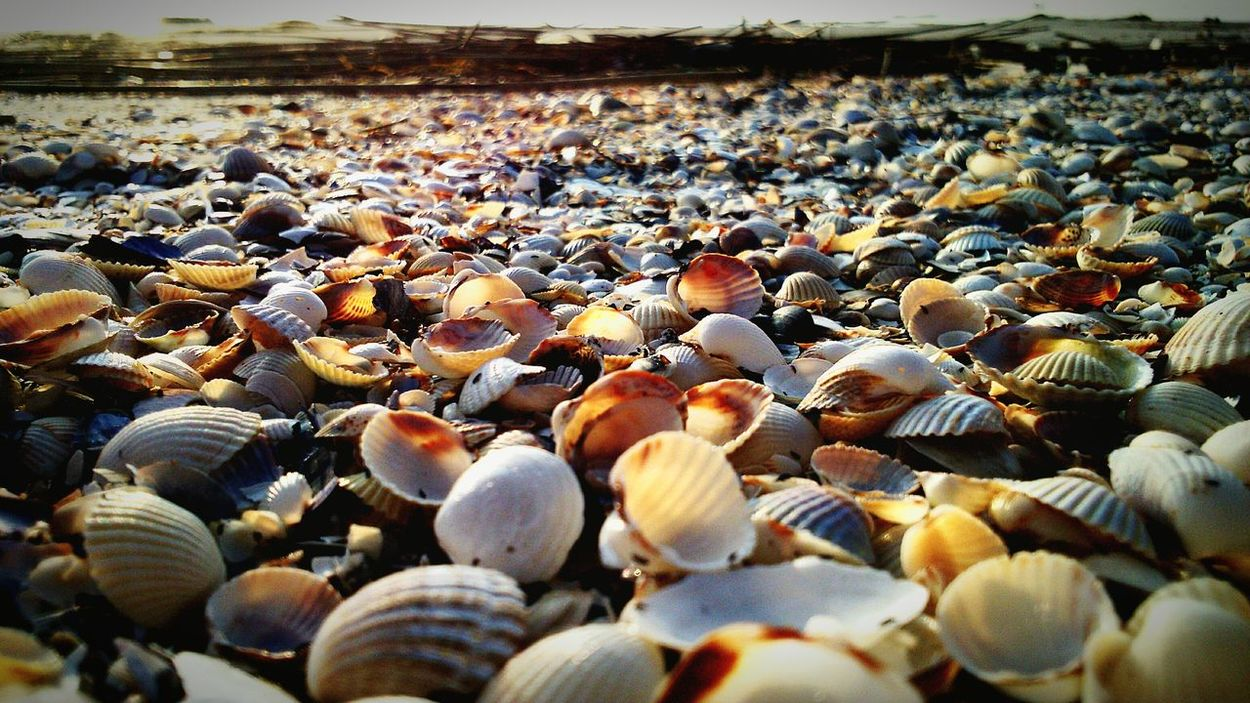 Beach Sun Seashells