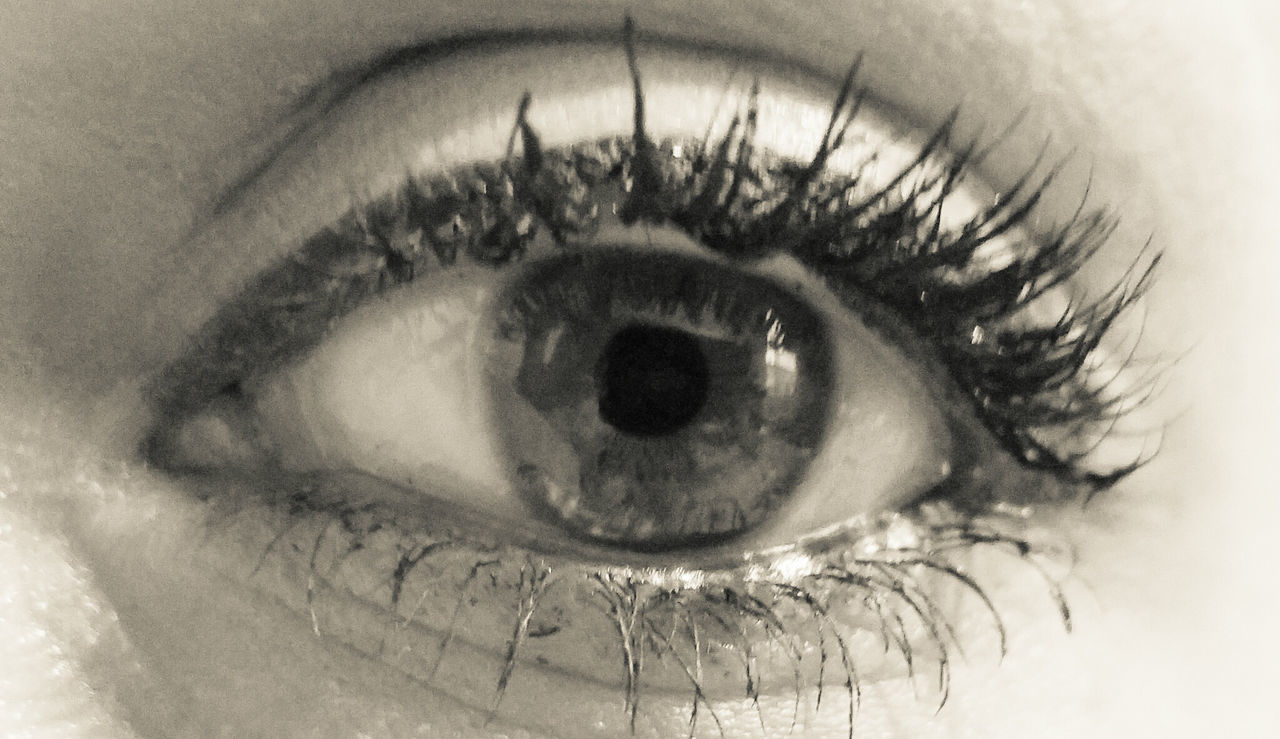 human eye, eyelash, one person, real people, human body part, eyesight, macro, looking at camera, close-up, sensory perception, eyeball, portrait, iris - eye, indoors, day, people, adult