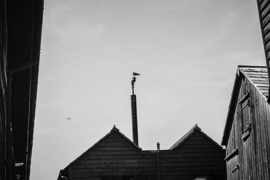 Architecture Black & White Black And White Building Exterior Built Structure Cladding Day Gull Historic Low Angle View Monochrome Net Shops No People Outdoors Roofscape Sky Timber Frame Timber Framed
