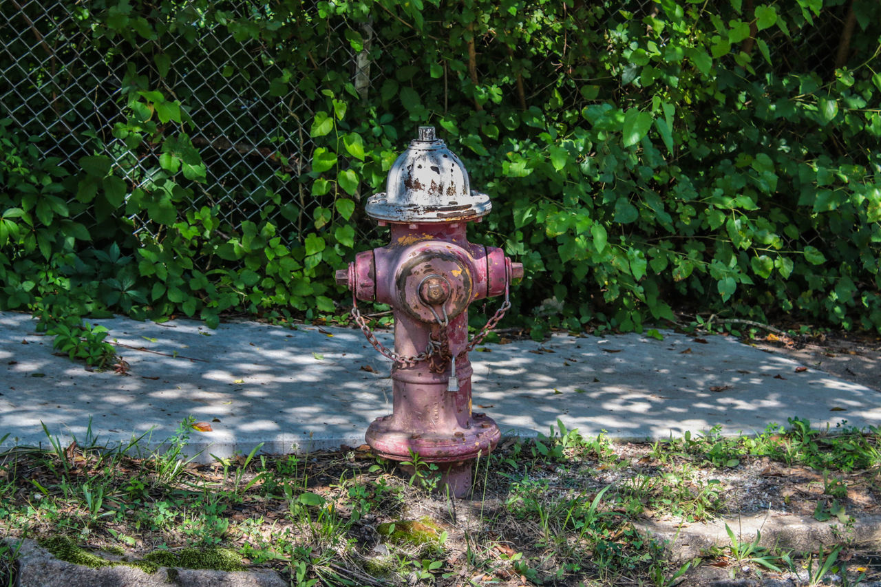 Close-up Day Eye4photography  Fire Hydrant Grass Growth Hdr_Collection Nature No People Outdoors Plant Tree Water