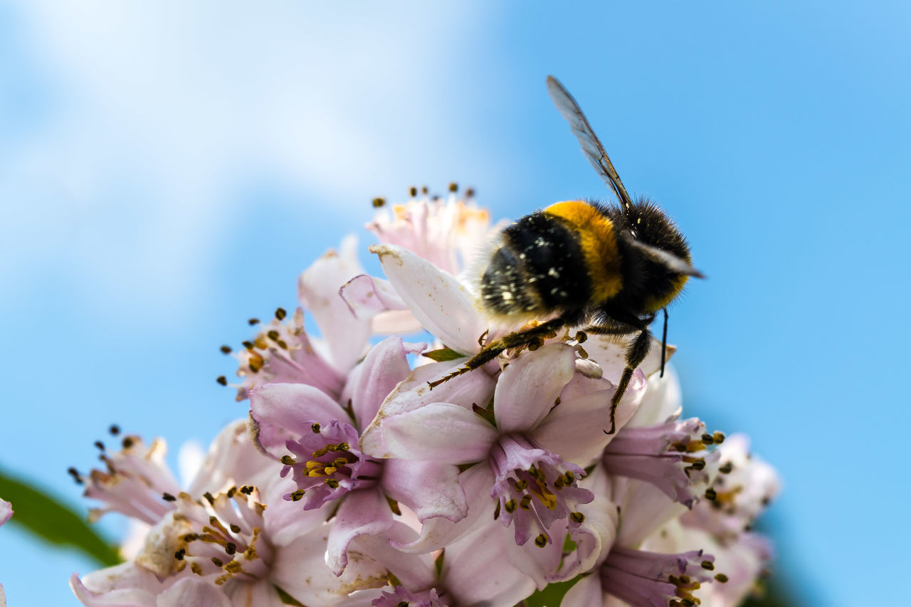 Beautiful stock photos of bee, Beauty In Nature, Close-Up, Day, Flower