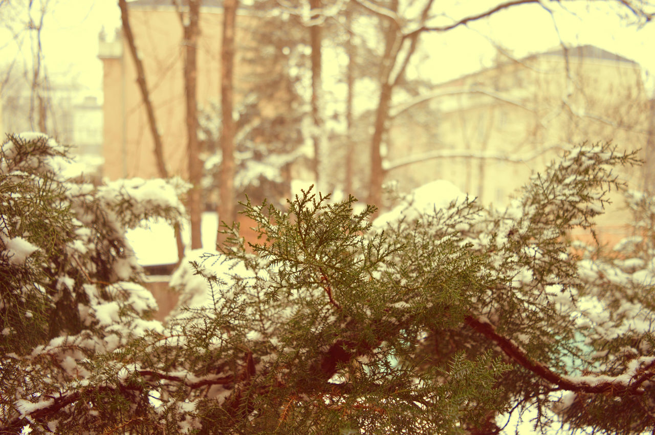 Beauty In Nature Branch City Close-up Cold Temperature Day Growth Nature No People No People Outdoors Outdoors Plant Snow Snow Day Snow ❄ Tree Wacholder Winter Winter Winter In The City Winter Wonderland Winterscapes Winterscene Wintertime Wonderland