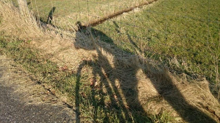 Kickbike ride Shadow Spring