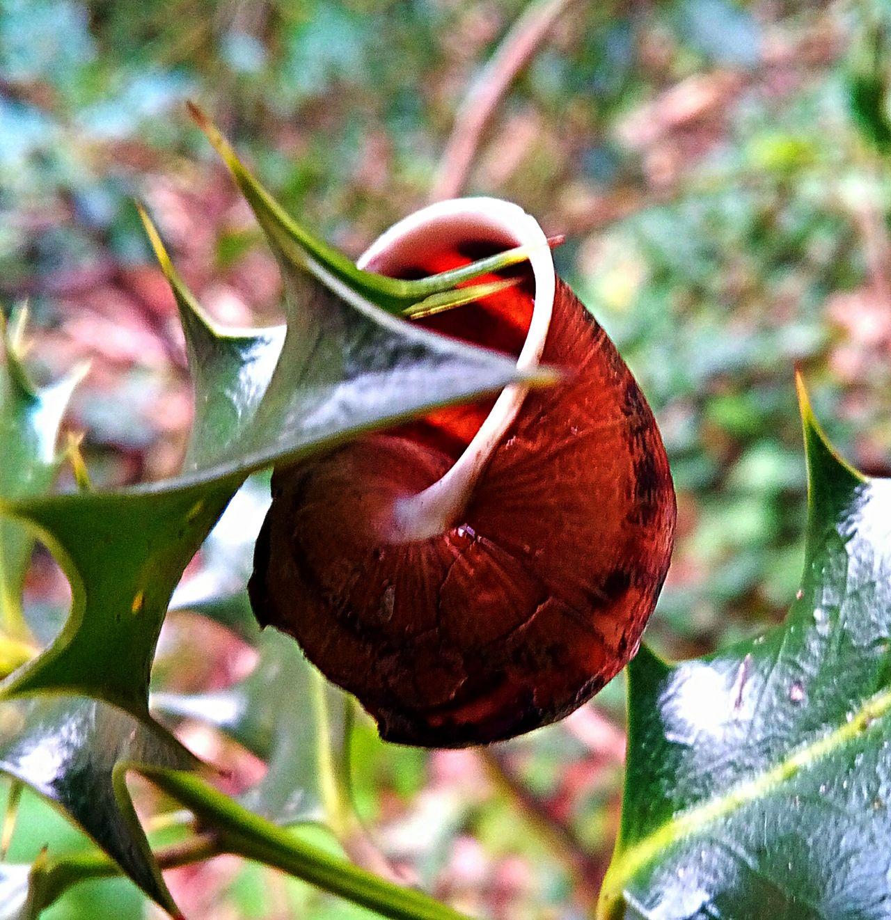 Growth Nature Close-up Plant Focus On Foreground Beauty In Nature Detail Macro Photography Snail Shells Artiseverywhere Eyemphotography