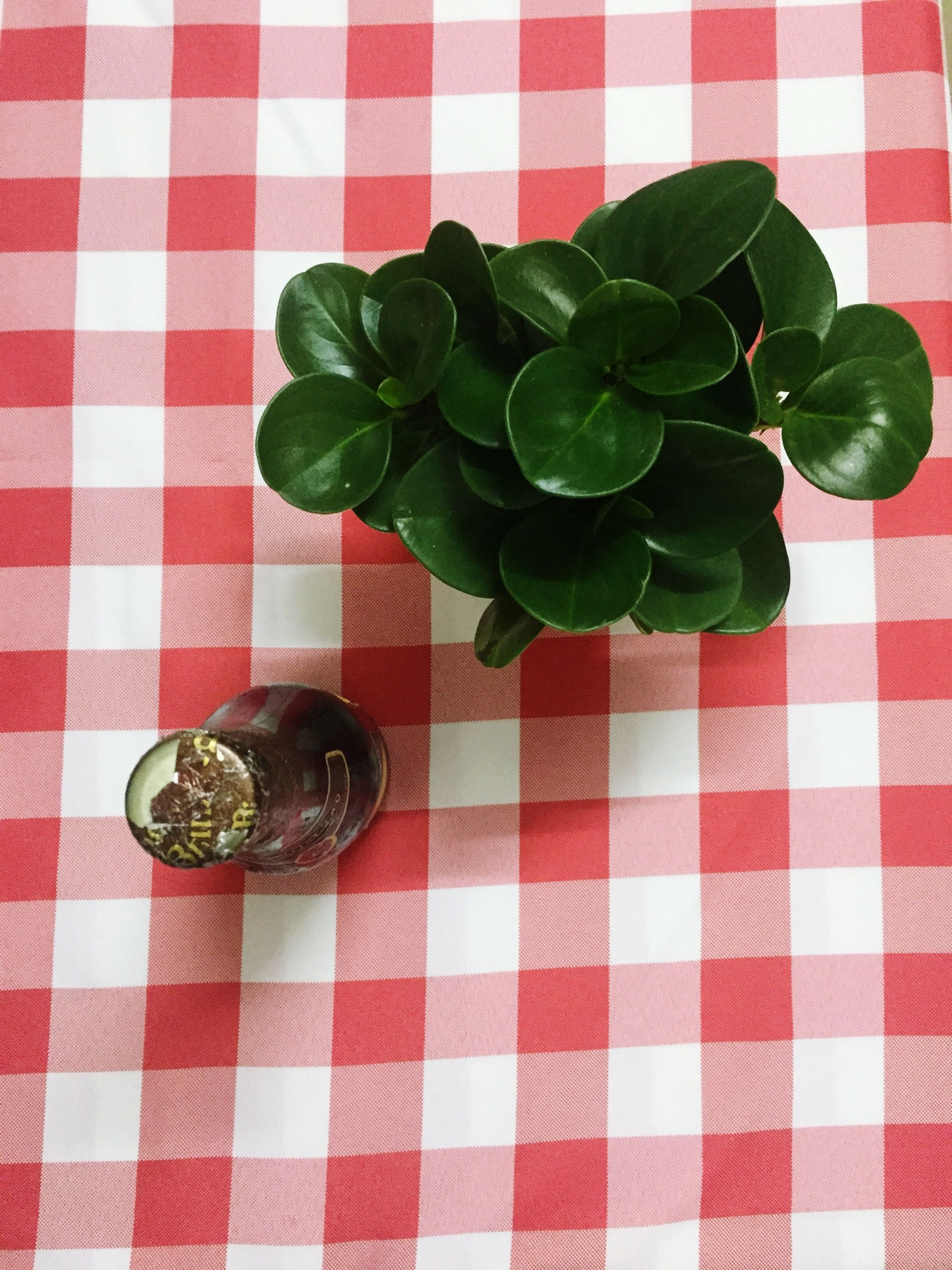 red, indoors, table, leaf, food and drink, high angle view, still life, freshness, close-up, tablecloth, green color, directly above, healthy eating, potted plant, no people, strawberry, fruit, food, plant, pattern