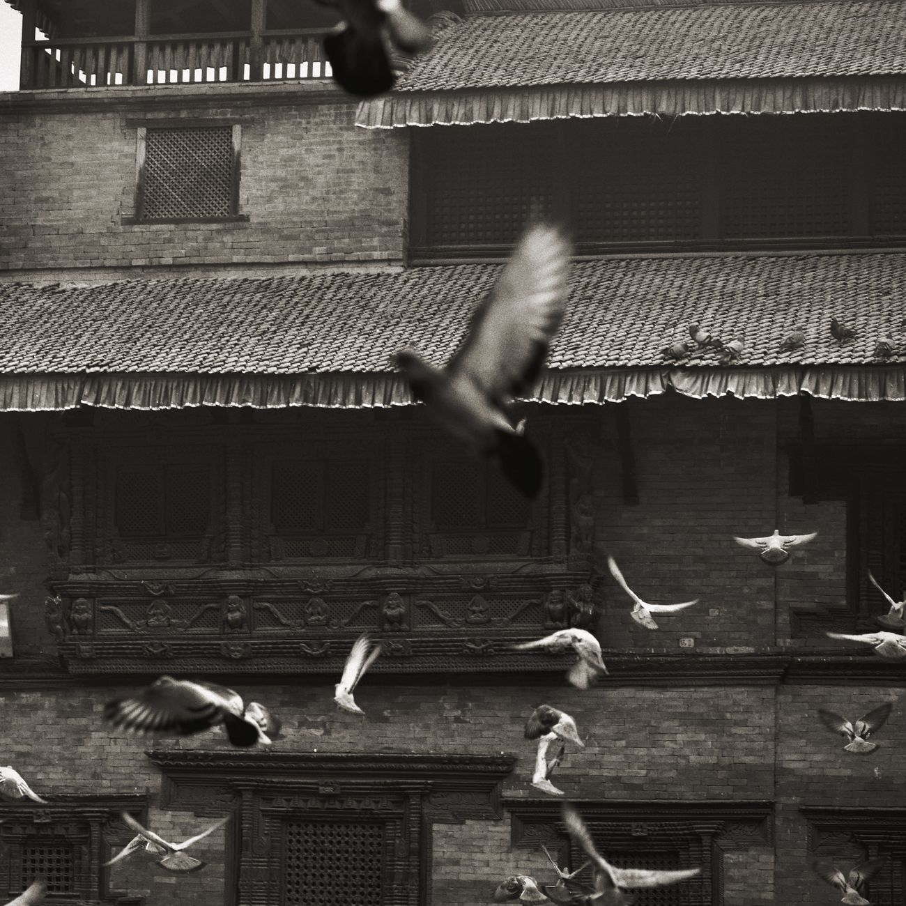 Traveling Life Dove Birds Bird Nepal Building Travel China Street Photography