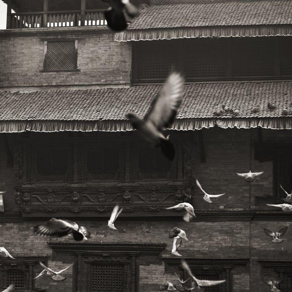 Traveling Life Dove Birds Bird Nepal Building Travel China Street Photography