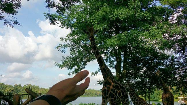 Randomshot Taking Photos Singapore Singapore Zoological Garden Animals Battle Of The Cities