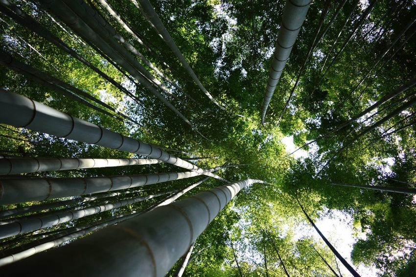 EyeEm EyeEm Best Shots EyeEm Nature Lover EyeEm Gallery EyeEm Best Edits EyeEmBestPics EyeEmNewHere Photo Awesome Green Nature Low Angle View Love Growth No People Tranquility Outdoors Green Color Beauty In Nature Bamboo - Plant Day Bamboo Grove