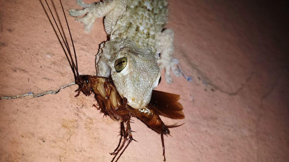 Beautiful stock photos of cockroach, Animal Antenna, Animal Mouth, Animal Themes, Animal Wildlife