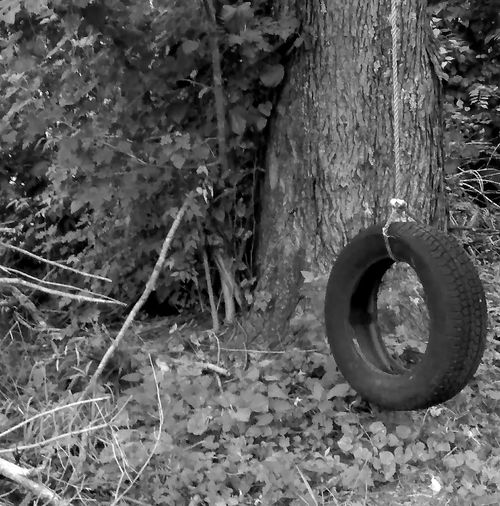 Tree Tree Trunk No People Outdoors Nature Growth Day Close-up Freelance LifeBlack And White Photography Natural Light EyeEm Gallery Forgotten Forgottenspots Tire Swing Weeds Overgrowing Overgrown Places Overgrowth And Unmaintained EyeEm Best Shots - Nature EyeEm Best Shots - Black + White Reflection Old Tree