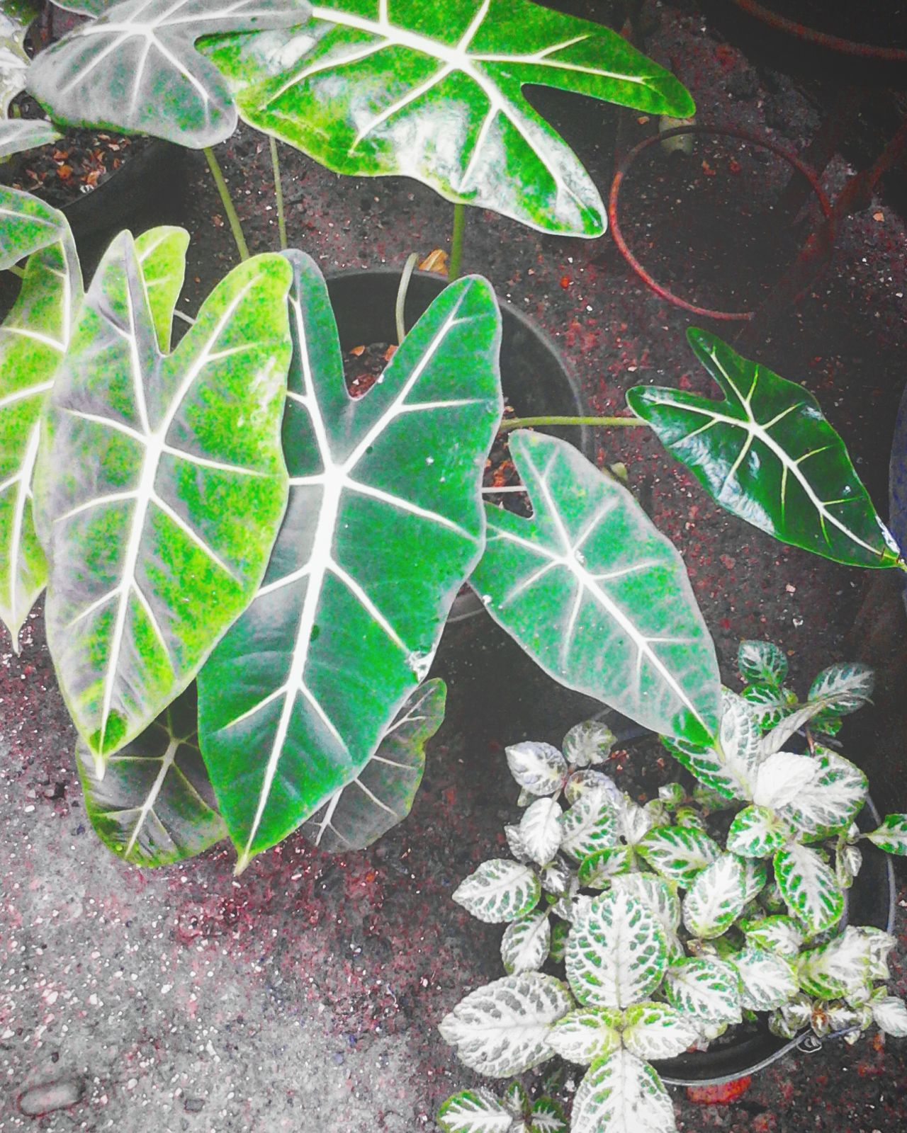 Plant Growth Leaf Nature No People Day Outdoors Green Color Cactus Close-up