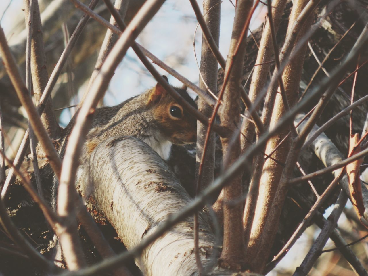 Hello World Taking Photos Check This Out Beautiful Nature From My Point Of View Squirrel Photo Looking For Peanuts Nature_collection Love Squirrels