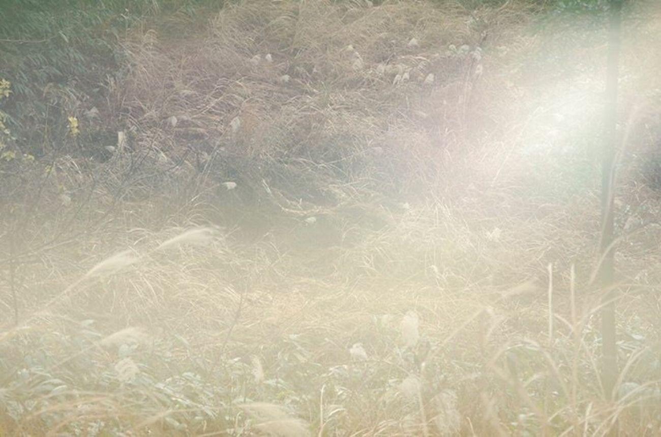 目の前の世界 Landscape_photography Nature Silvergrass Precious Moments Of Life Beauty In Nature Feelings