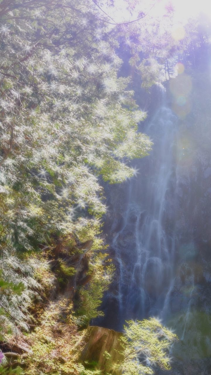 nature, beauty in nature, tranquility, day, no people, scenics, tranquil scene, motion, outdoors, blurred motion, tree, forest, water, growth, waterfall, sky