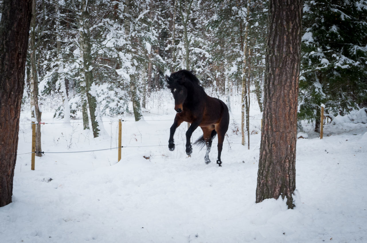 Beautiful stock photos of lustige tiere,  Animal Themes,  Brown,  Cold Temperature,  Day