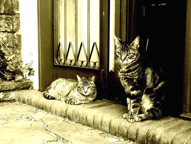 Cats Of EyeEm Animal Lover Animal Photography Catsofinstagram Cat Lovers Cats Relaxing Catshooting