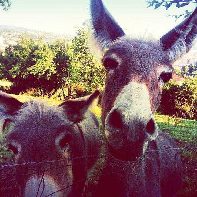 """""""B"""" de burro Animals"""