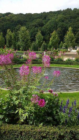 Schloßgarten EyeEm Best Shots Schloss Weesenstein Sachsen Taking Photos Beautiful Pflanzenwelt Green Beautiful Nature Nature Flowers