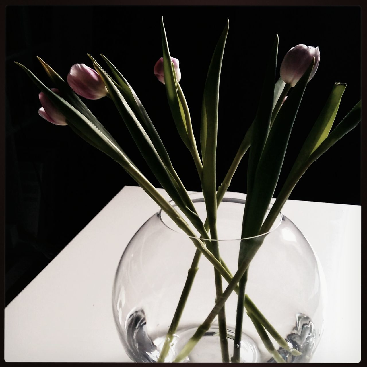 vase, flower, indoors, plant, tulip, growth, no people, close-up, freshness, flower head, nature
