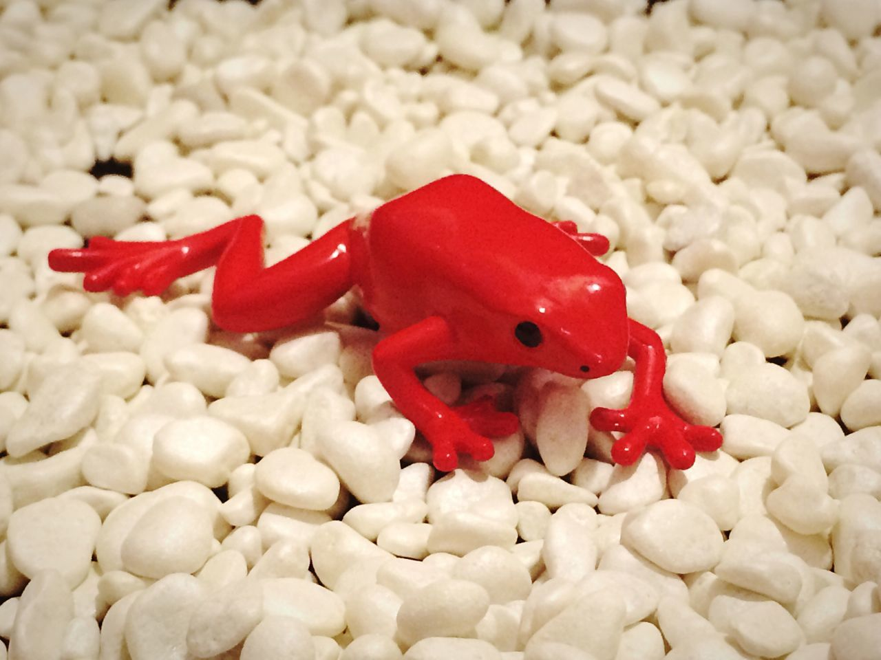 Miniature Red Frog Toy