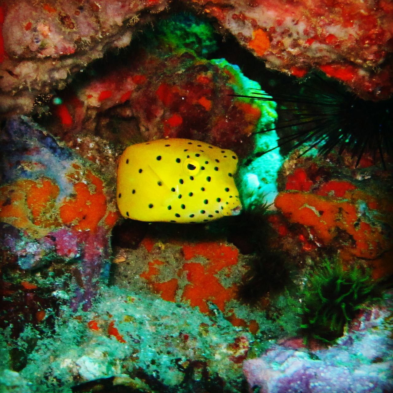 underwater, undersea, sea life, animals in the wild, animal themes, one animal, coral, reef, fish, sea, nature, no people, animal wildlife, water, swimming, close-up, beauty in nature, indoors, day