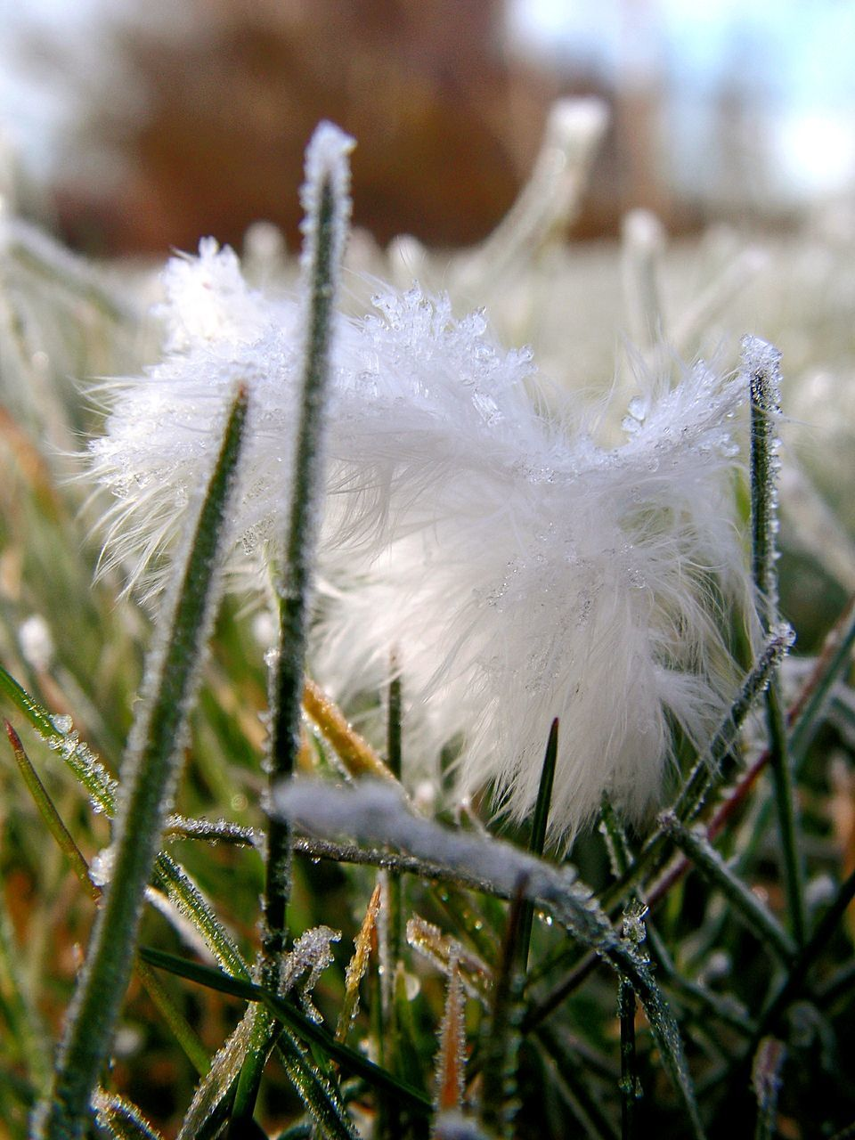 white color, close-up, nature, softness, fragility, growth, focus on foreground, flower, day, no people, beauty in nature, plant, outdoors, grass, winter, flower head