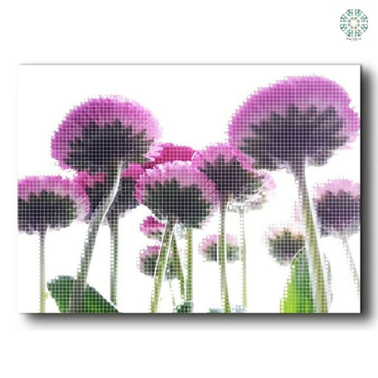 Superb_flowers Jj_florals Naturelovers Nature_shooters nature_perfection nature_featuring naturebeauty flowerslowers flowerstyles_gf flowerstagram