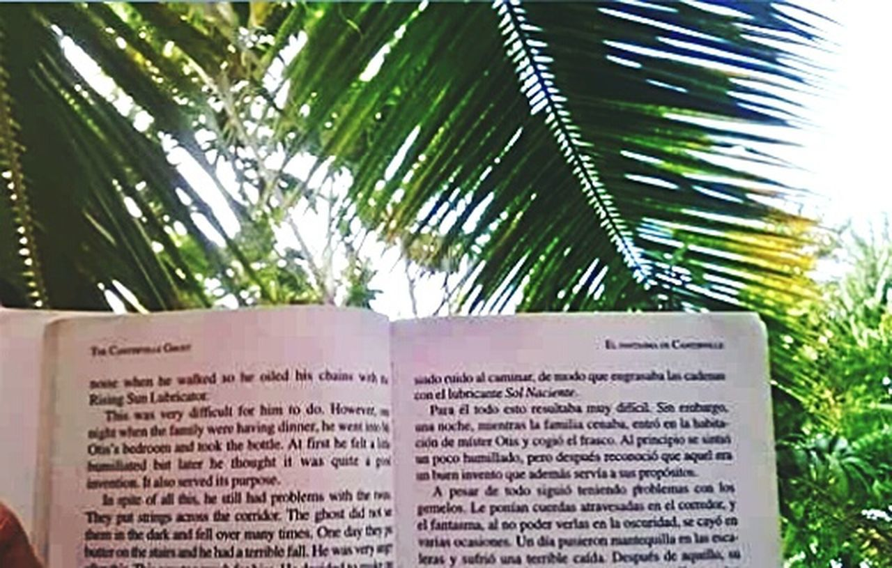 text, communication, celebration, day, palm tree, close-up, no people, outdoors
