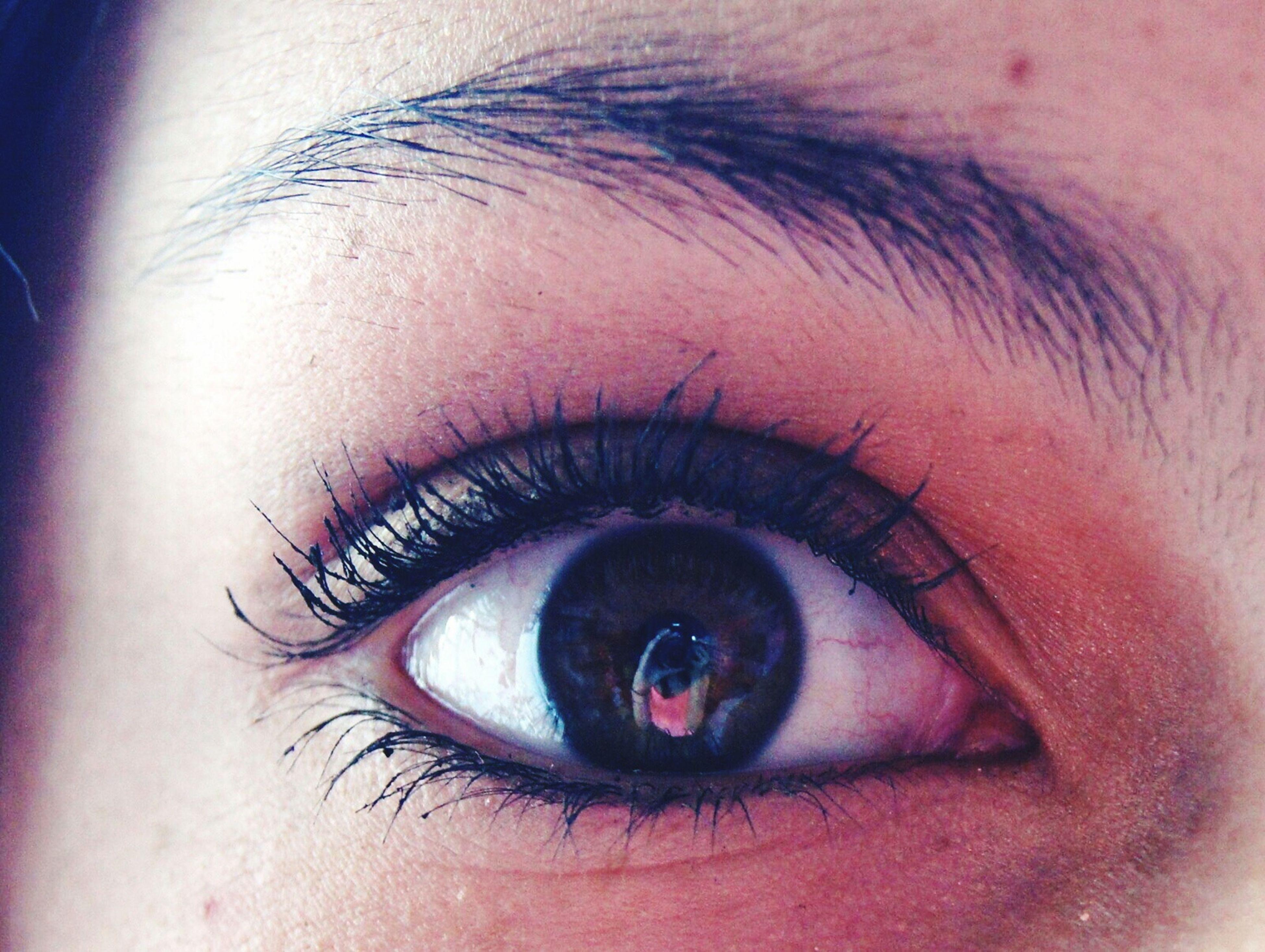 human eye, eyelash, close-up, eyesight, looking at camera, sensory perception, portrait, part of, eyeball, iris - eye, human skin, extreme close-up, human face, lifestyles, eyebrow, person, indoors