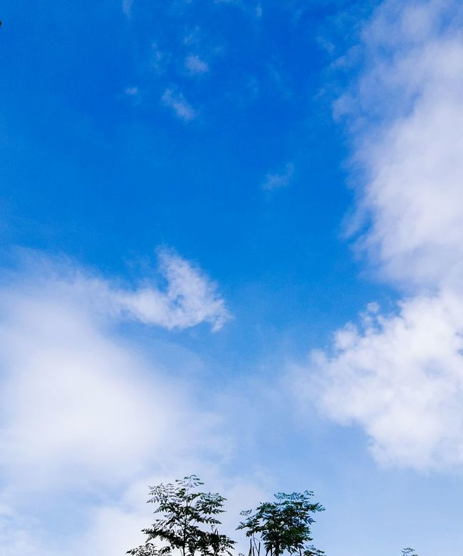Blue Low Angle View Tree Sky Tranquility Scenics Tranquil Scene Beauty In Nature Cloud Cloud - Sky Nature Day High Section Branch Outdoors Growth Nature Calm Non-urban Scene Carefree Enjoyment Treetop Majestic Solitude No People