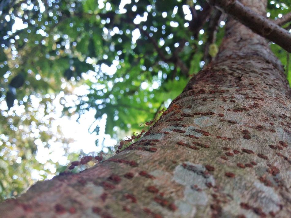 Texture of star gooseberry tree bark Background Background Texture Backgrounds Bole Close-up Closeup Gooseberry Haulm Nature Nature Nature_collection Naturelovers No People Outdoors Plant Plants Star Gooseberry Textured  Tree Tree Trunk Trunk Trunk Detail Trunk Tree Trunkofwood Trunks