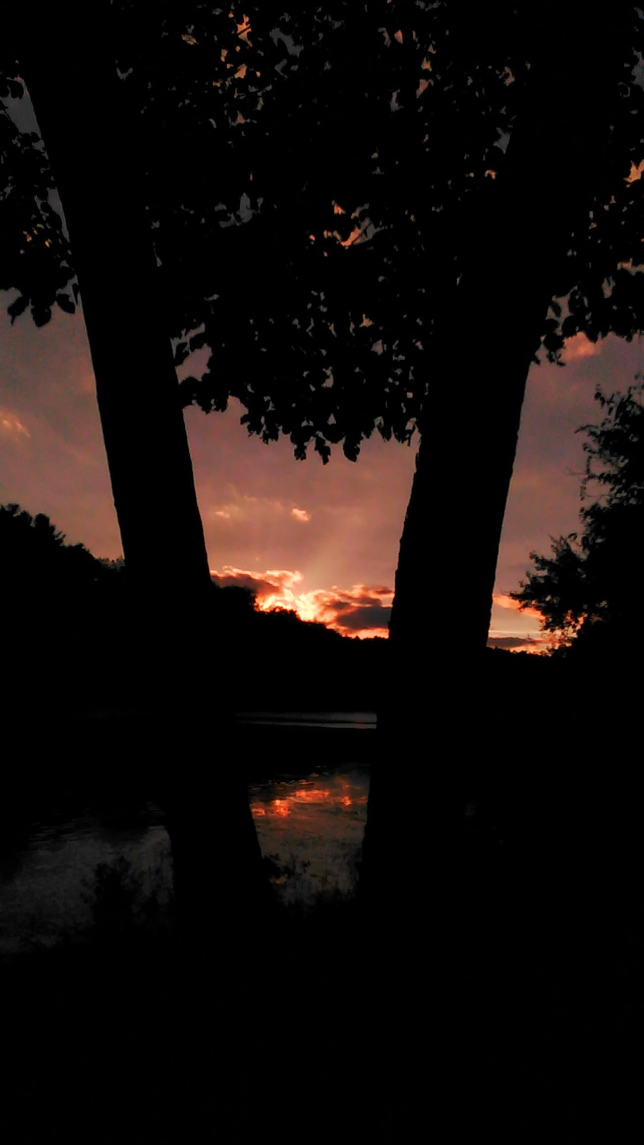 Tonight's sky Sunset Silhouette Tree Water Beauty In Nature Orange Color No Filter, No Edit, Just Photography Allegheny River Onlygodcouldcreatethis Sawonmyadventure Focus On Foreground Sunset_captures
