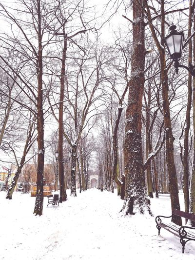 Snow Winter Cold Temperature Tree Nature Day Outdoors Bare Tree No People Beauty In Nature Sky