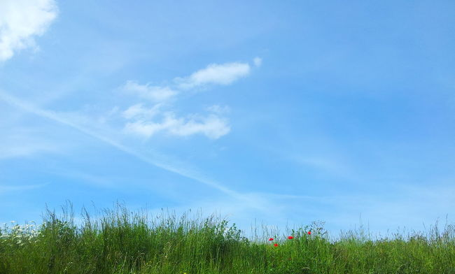 Beauty In Nature Blue Cloud Cloud - Sky Countryside Day Grass Grassy Green Green Color Growth High Section Nature Non-urban Scene Outdoors Plant Scenics Sky Solitude Tranquil Scene Tranquility Uncultivated Vapor Trail